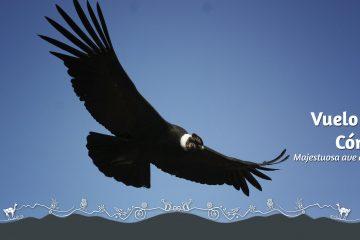 vuelo-del-condor-colca